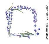 wildflower lavander flower... | Shutterstock . vector #731032864