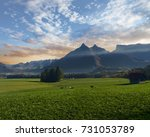 cattle grazing in the swiss... | Shutterstock . vector #731053789