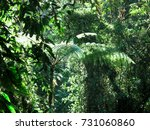 green and thick tropical rain... | Shutterstock . vector #731060860