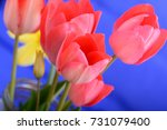 beautiful background with red... | Shutterstock . vector #731079400