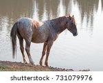 Wild Horse   Red Roan Stallion...