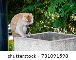 City Monkey. Macaque Mother An...
