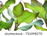 green leaves of ornamental... | Shutterstock . vector #731098270