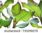 green leaves of ornamental... | Shutterstock . vector #731098270