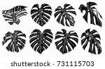 monstera leaf sketch by hand... | Shutterstock .eps vector #731115703
