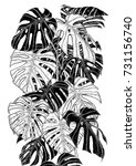Monstera Sketch By Hand Drawin...