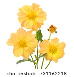 beautiful bouquet of yellow... | Shutterstock . vector #731162218