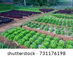 vegetable cultivation. | Shutterstock . vector #731176198