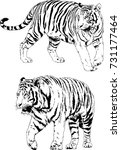 set of vector drawings on the... | Shutterstock .eps vector #731177464