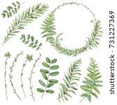 botanical illustrations. floral ... | Shutterstock . vector #731227369