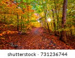 colorful fall landscape ... | Shutterstock . vector #731236744