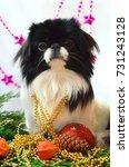 dog  very cute puppy japanese... | Shutterstock . vector #731243128
