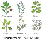 set of spices  herbs and... | Shutterstock . vector #731264830