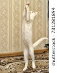 Small photo of white kitten albino playing jumping