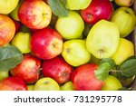 green and red apples in a... | Shutterstock . vector #731295778