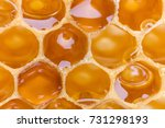 extreme macro shot of a honey... | Shutterstock . vector #731298193