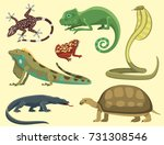 Reptile And Amphibian Colorful...