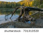 Uprooted Dry Tree In The Kizir...