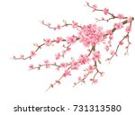 the cherry blossoms are... | Shutterstock . vector #731313580
