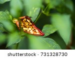 chillies come out of too much... | Shutterstock . vector #731328730