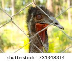 An Ostrich In A Cage