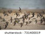 Flock Of Birds Flying Across...