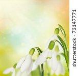 Snowdrop Galanthus flowers on spring bokeh background. - stock photo