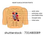 vector illustration of heart... | Shutterstock .eps vector #731480089