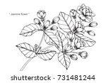 hand drawing and sketch jasmine ... | Shutterstock .eps vector #731481244
