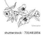 hand drawing and sketch...   Shutterstock .eps vector #731481856