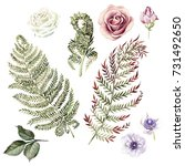 watercolor set with fern leaves ... | Shutterstock . vector #731492650