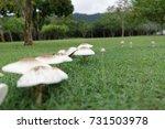 Mushroom Growing In The Meadow...