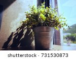 ornamental plant is located by... | Shutterstock . vector #731530873