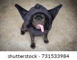 Devil Pug Dog. Funny Pug Dog...