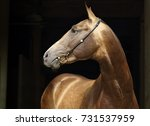 akhal teke horses in a stud...   Shutterstock . vector #731537959