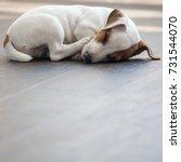 Stock photo puppy at home dog sleeping at warm floor pet 731544070
