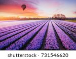 a beautiful field of flowers in ... | Shutterstock . vector #731546620