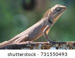 portrait of a lizard holding on ... | Shutterstock . vector #731550493