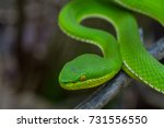 close up yellow lipped green... | Shutterstock . vector #731556550