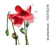 watercolor poppy elements with... | Shutterstock . vector #731576278