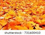 autumn leaves on ground. | Shutterstock . vector #731600410