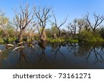 a river channel in danube delta ... | Shutterstock . vector #73161271