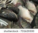 fresh fish  fresh nile tilapia...   Shutterstock . vector #731620330