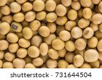 soy bean background | Shutterstock . vector #731644504
