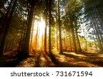 golden rays of sunshine shining ... | Shutterstock . vector #731671594