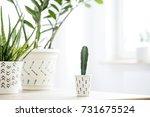 interior of a home garden... | Shutterstock . vector #731675524