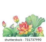 greeting card with pink lotus... | Shutterstock . vector #731737990