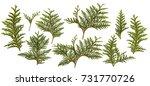 fresh green pine leaves... | Shutterstock . vector #731770726