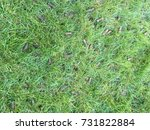 lawn core aeration  | Shutterstock . vector #731822884