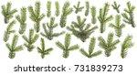 set of fresh green pine... | Shutterstock . vector #731839273